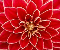 bloom-blossom-close-up-65940